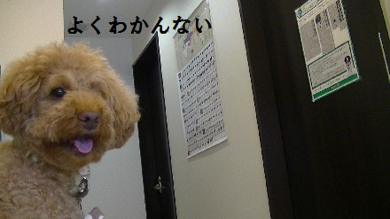 PIC_0564(1).jpg