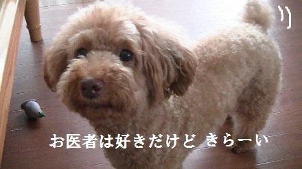 PIC_0569(1).jpg