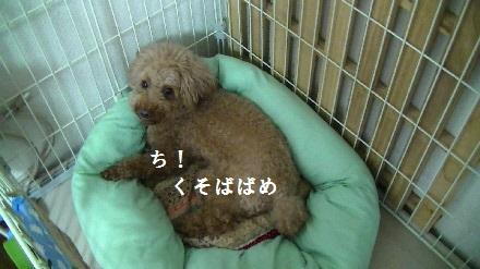 PIC_0581(1).jpg