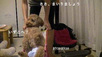 PIC_0822(1).jpg