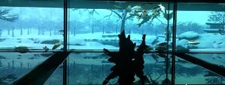 20140215aquarium4.jpg