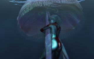 JellyFish(1)1.jpg