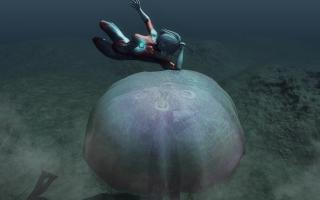 JellyFish(2)_20130820172319a34.jpg