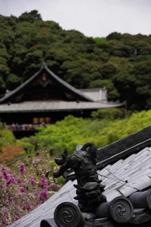 長谷寺 狛犬