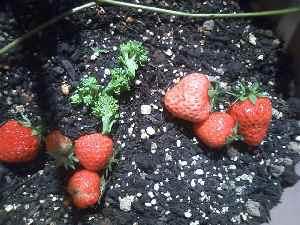 5-14収穫
