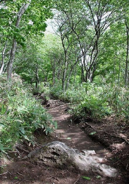 湿原への山道