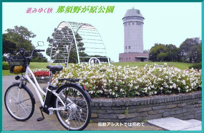 那須野が原公園の秋