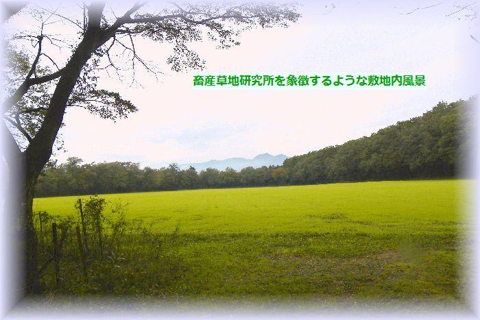草地研内風景