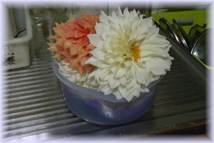 ダリア花弁