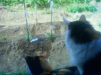 庭どりぐり