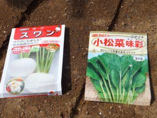カブ&小松菜