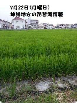 7月22日の琵琶湖情報