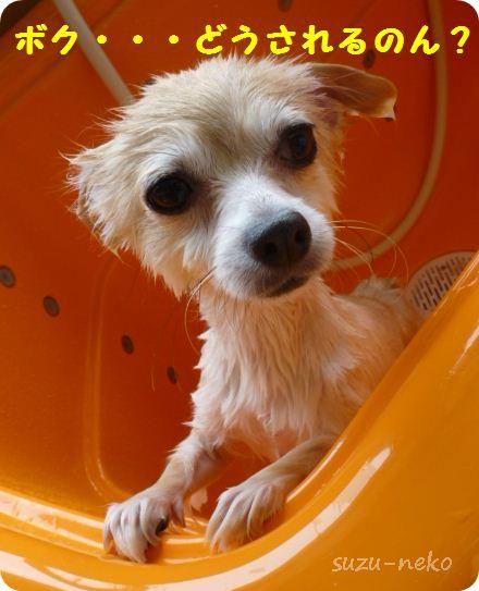 濡れ衣じゃ無くて、濡れ犬だぁぁぁ