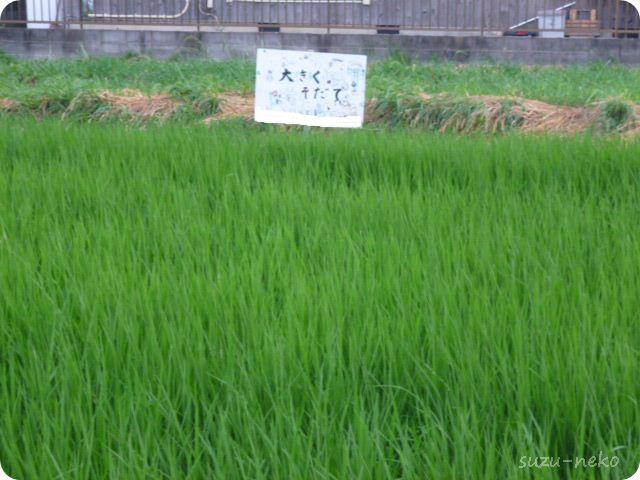 少年団の稲造