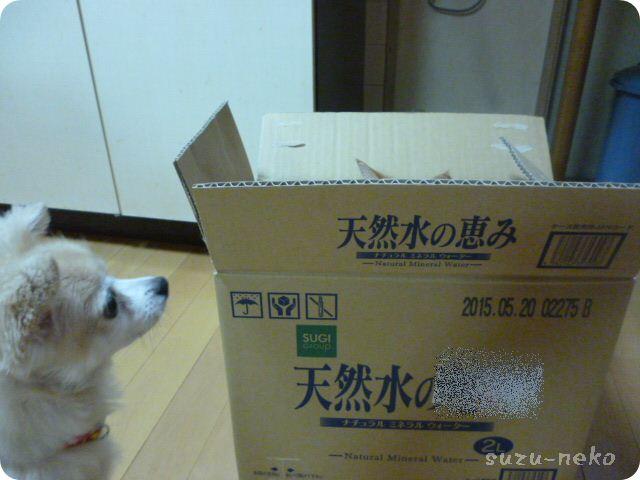 箱の中身はなんじゃらホイ