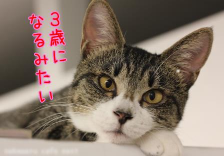 ももちゃん20130908-01