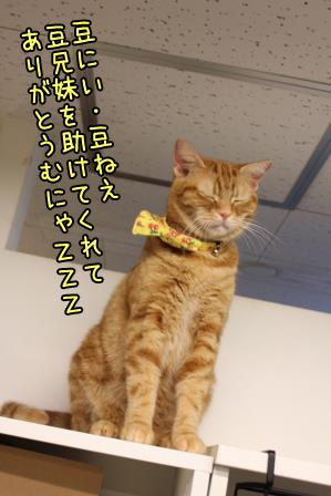 豆太郎20131011-01