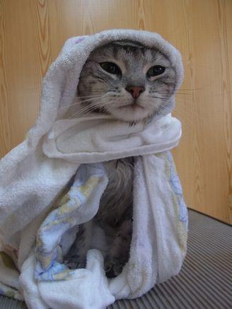 ターさんの風呂あがり