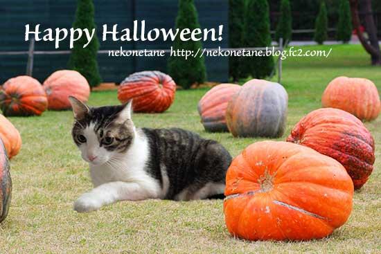 Happy Halloweenカード