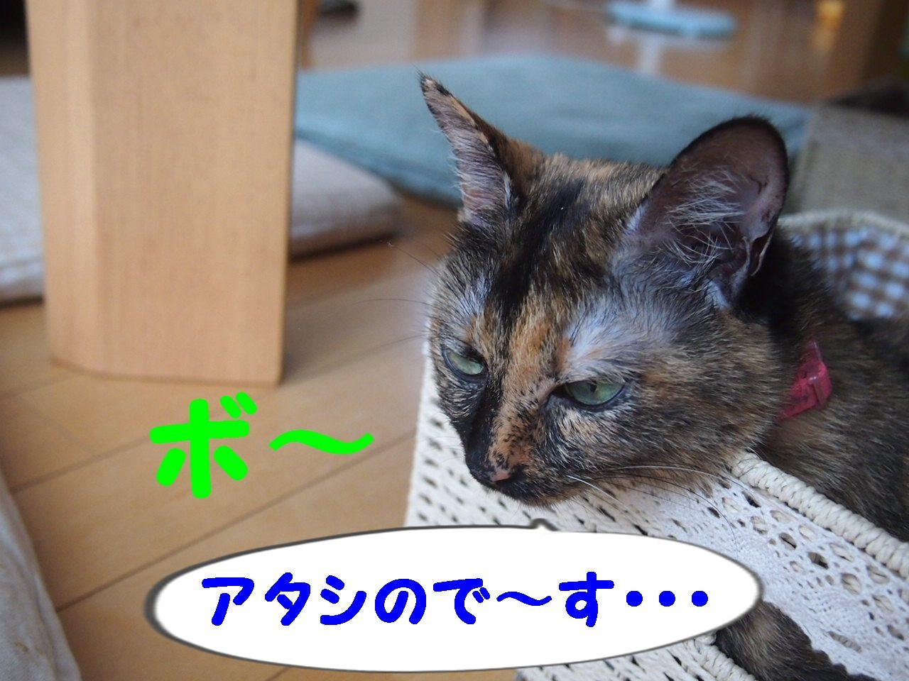 006_20130717192742.jpg