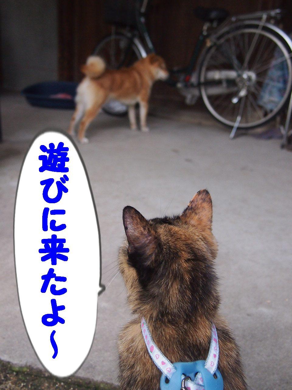 009_20130707091347.jpg