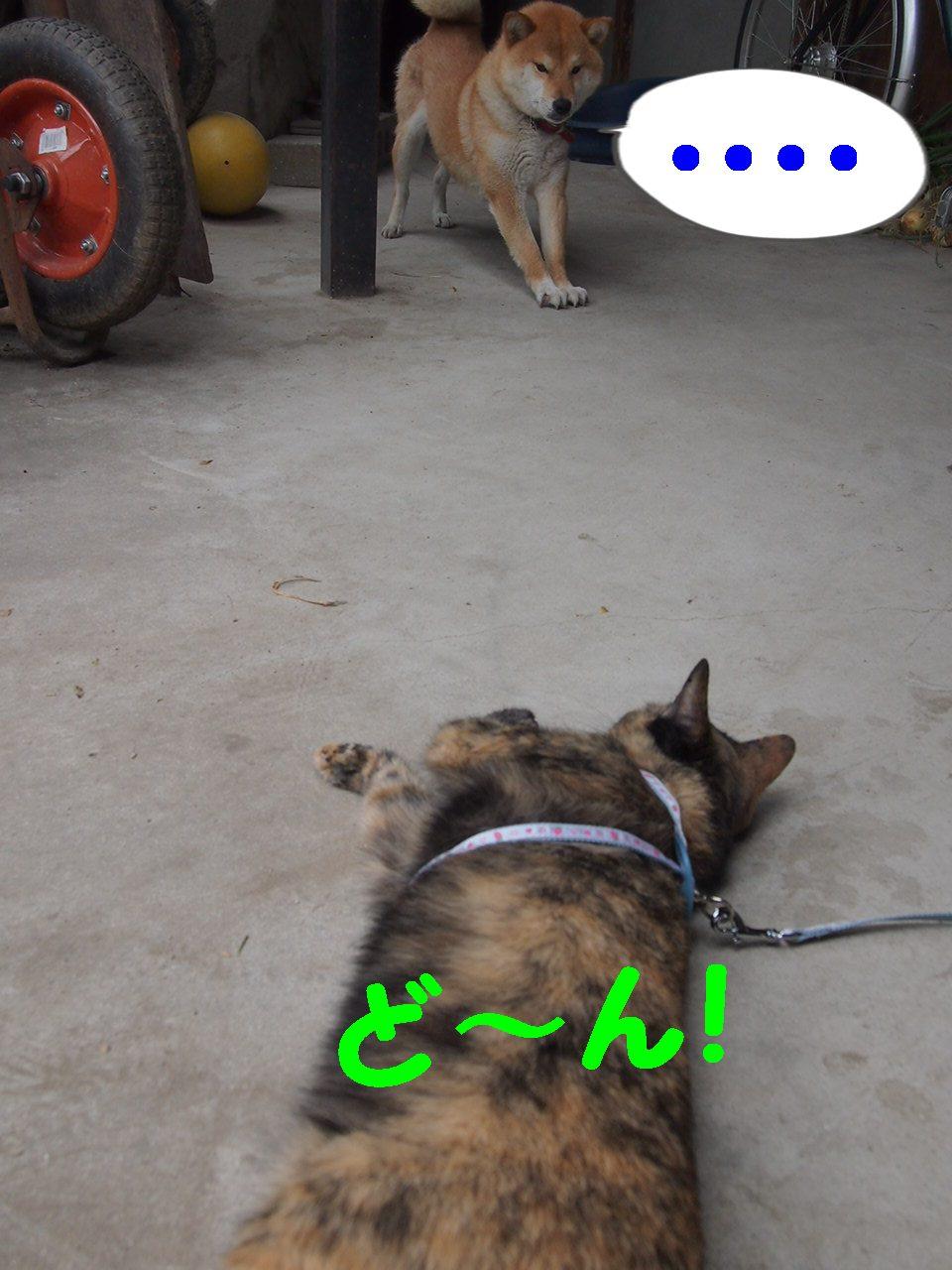 011_20130601202451.jpg