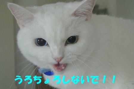 1308282.jpg