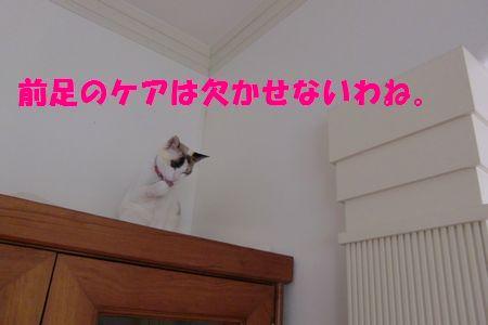 498resizr4501305233.jpg