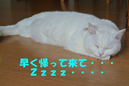 DSC_023401306165.jpg