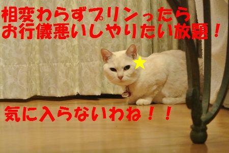DSC_02801306192.jpg