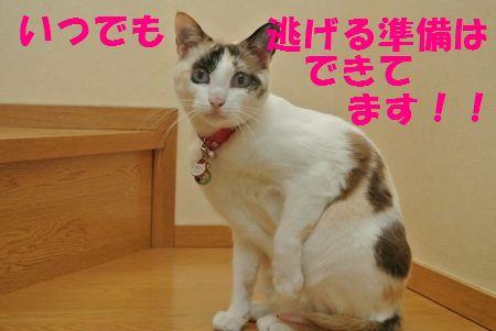 DSC_03781306113.jpg
