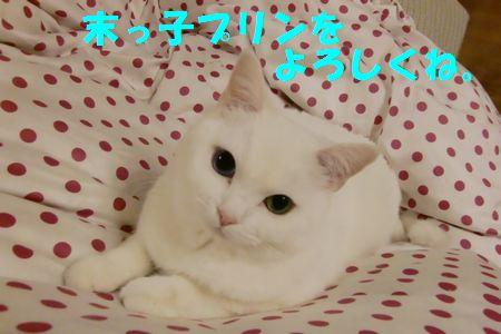 resize1395261.jpg