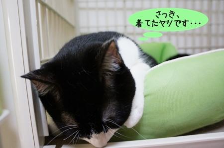 さっき着てた猫