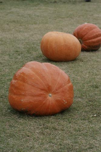 2013ハロウィンかぼちゃ
