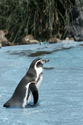 20150920ペンギン1