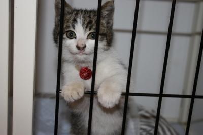 諏訪野町保護猫①
