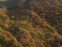 高山線紅葉2