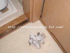 洗濯機隙間掃除6