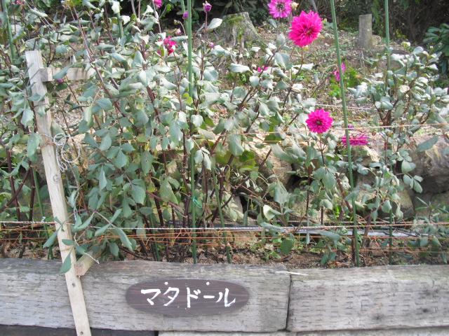広川SA上りのランと花めぐり 022