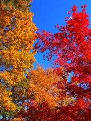 赤と黄の紅葉
