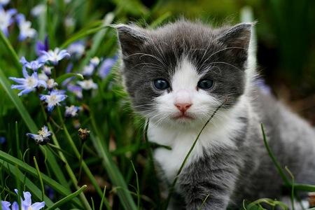 130515 cat