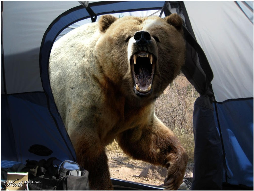 【秋田・筍続報秋田でタケノコ採りの男性2人不明 熊に襲われた可能性も 5月以降すでに4人が遺体で発見】 [無断転載禁止]©2ch.net YouTube動画>2本 ->画像>25枚