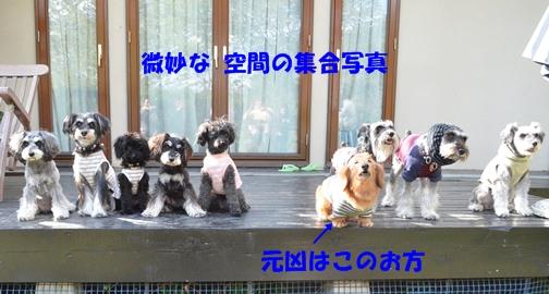 3_20130729114137.jpg