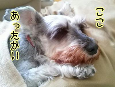 moblog_3dc6641d.jpg