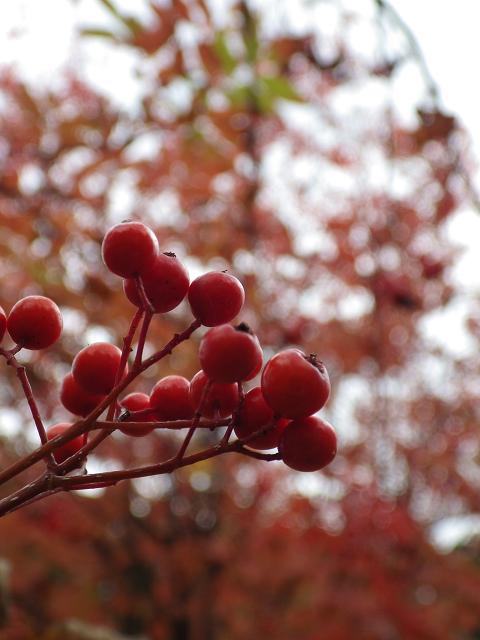 秋の1枚 2013