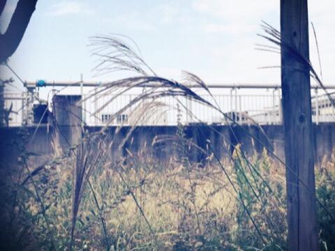 fence1102.jpg