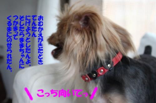IMG_0139_20130820203832b9f.jpg