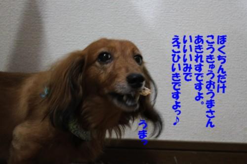 IMG_0254_20130826103114b37.jpg