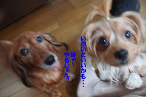 IMG_0357_20130830220755d0b.jpg