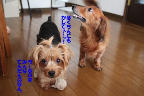 IMG_0392.jpg